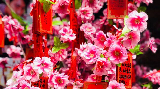 פרחים בסין